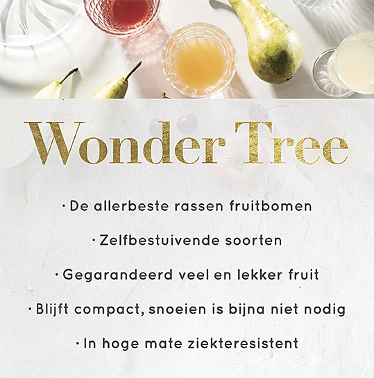 Wonder Tree Fruithof